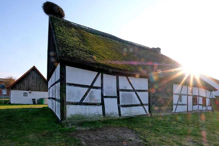 Viereck - Reetgedeckte Fachwerkscheune mit Storchennest im Sonnenschein